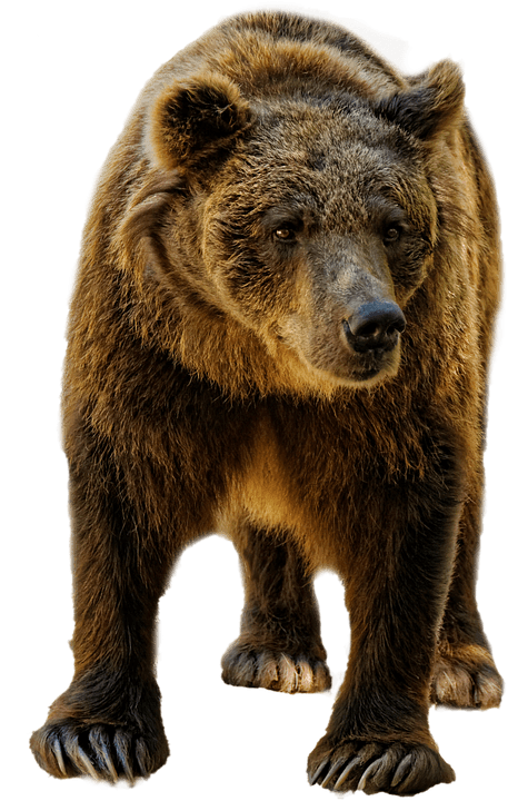 Best Bear Spray Reviews 2019
