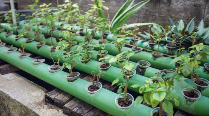 Aquaponics plants growing in metal pipes with circulating water right up on fish pond, permaculture farm project