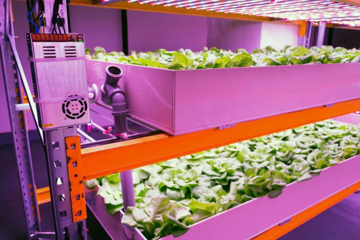 Electronics controling aquaponics system that combines fish aquaculture with hydroponics, cultivating plants in water under artificial lighting