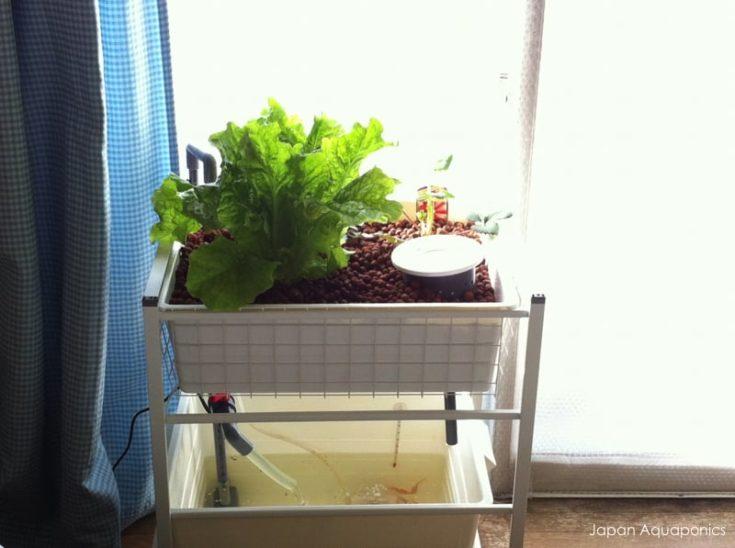 Indoor Mini Aquaponics System